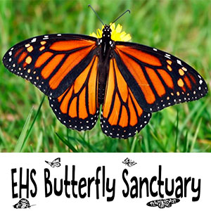 Butterfly Sanctuary Video